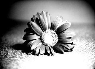 wilting_flower_p1__japanese__by_rasberryhiyata